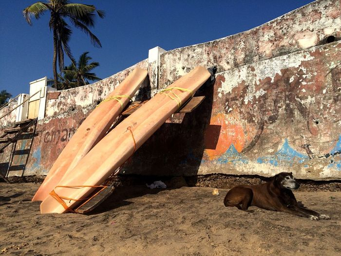 Surfboards along with stray dog by surrounding wall at anjuna beach