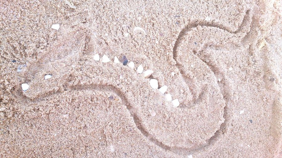 Sand Drawing Art Full Frame Shells🐚 Dragon No People Outdoors Greece Rhodos Lachania Beach Backgrounds Close-up Textured  Day