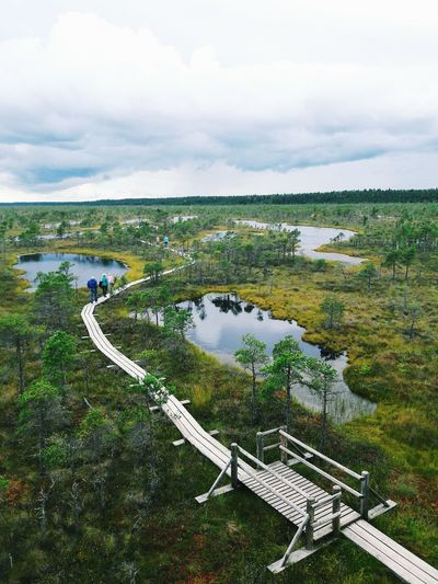 Swamp Nature Photography View From Above View Tower