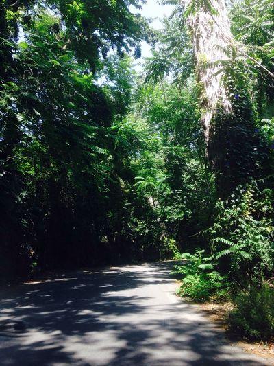Una selva en Malaga