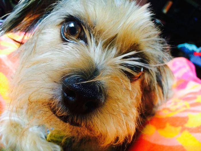 I love my dog Poochie Beautiful Creature