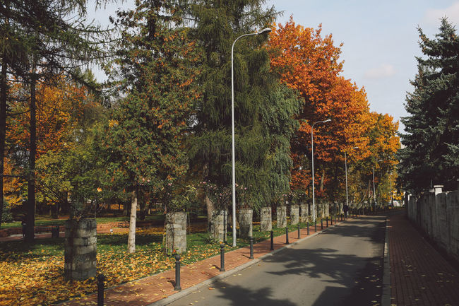 Autumn Autumn Colors Autumn Leaves Colors Day Growth Leafs Nature No People Outdoors Park Road Sky The Way Forward Transportation Tree Trees