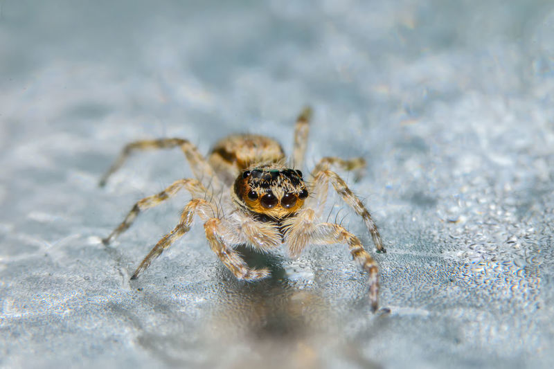 Close-Up Of Spider On Wet Surface