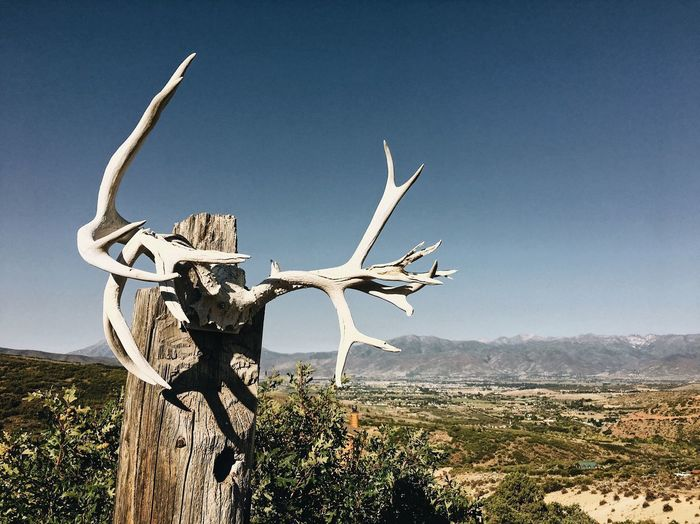 a sample of the local exterior home decor. ⛰🦌 Cowboylife Localcharm Antlers Wasatch Back Utah Wasatch Mountains