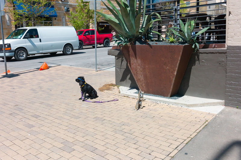 A dog poses with a skateboard. Animal Themes City Scene Dog Dog With Sunglasses Outdoors Skate Board Sunglasses Sunny