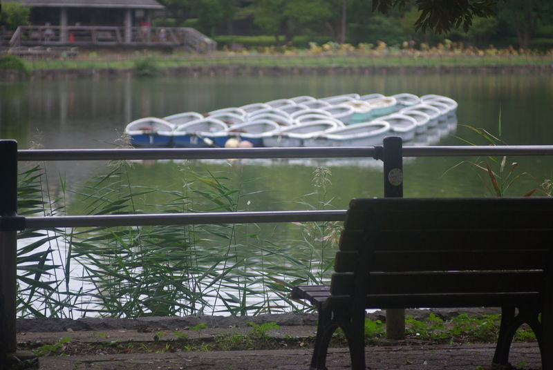 Water Lake No People Tree Day Nature Outdoors Animal Themes Beauty In Nature Mammal Wark Warking Park Lake View Benches Japan Photography Modern