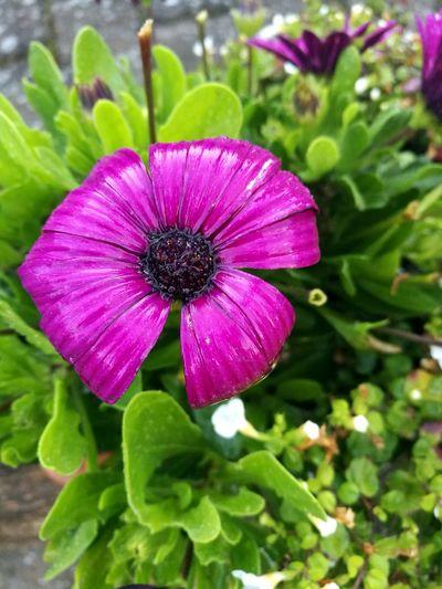 New Phone Camera Test Closup HuaweiP9 Dual Lens Leica Flower First Eyeem Photo