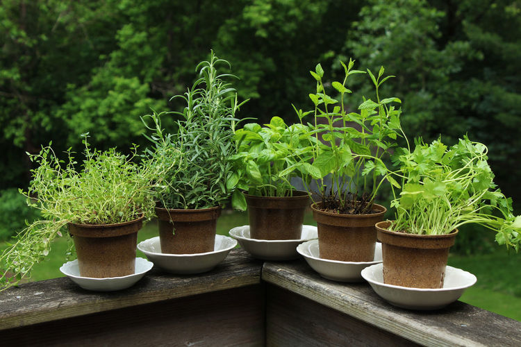 Close-up of potted plants in garden