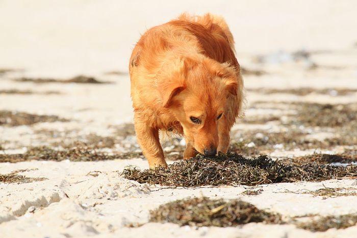 Hund Hunde Dog Dogs Animals Animal Retriever Mischling Beachphotography Beach