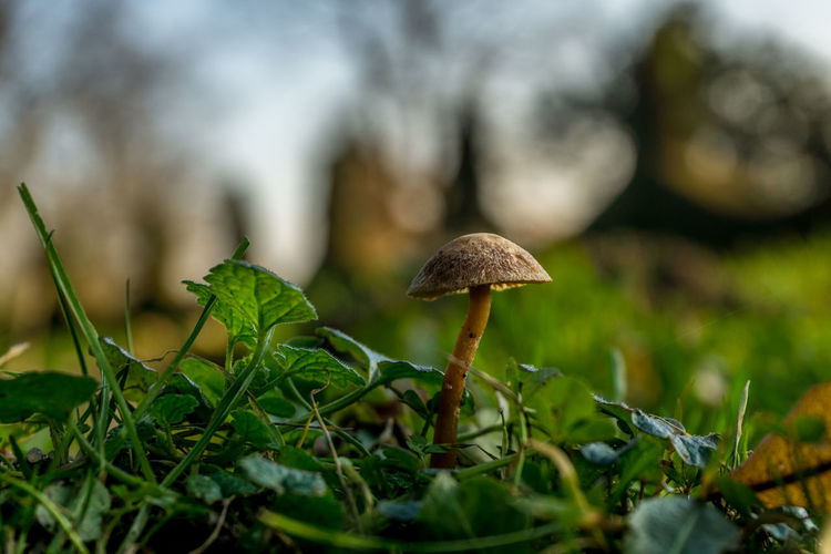 Amburgo Beauty In Nature Blankenese Close-up Day Deutschland Fragility Freshness Fungo Gastropod Germania Germany Green Color Growth Hamburg Inverno Leaf Mushroom Nature No People Outdoors Pilz Surface Level Toadstool Winter