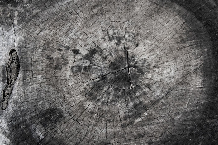 Backgrounds Close-up Concentric Cracked Cross Section Day Log Lumber Industry Nature No People Outdoors Textured  Timber Tree Tree Ring Tree Stump Wood - Material Wood Grain Break The Mold.