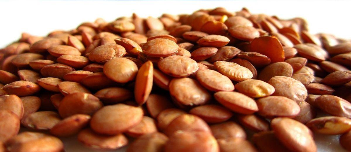 Close-up of lentils