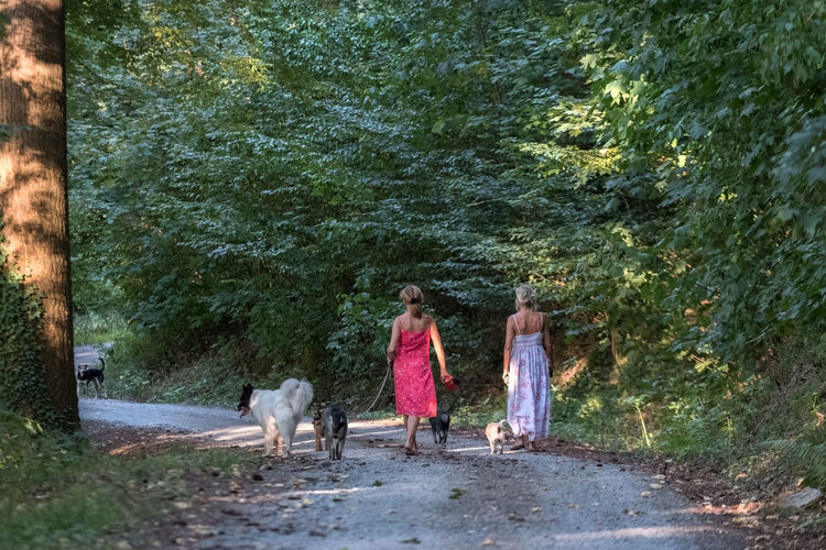 two ladies walking five dogs Lifestyle Summertime Animal Animal Themes Canine Dog Domestic Domestic Animals Five Dogs Forest Full Length Leisure Activity Mammal Outdoors Pet Owner Pets Plant Real People Rear View Tree Walking Walking The Dog