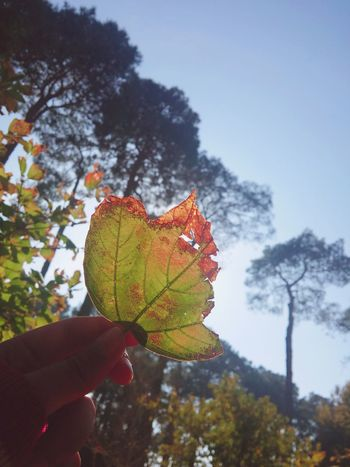 Tree Plant Day Leaves🌿 Special Day ❤ Sunny Day Happy :) :) Human Hand Leaf Beauty In Nature Sky