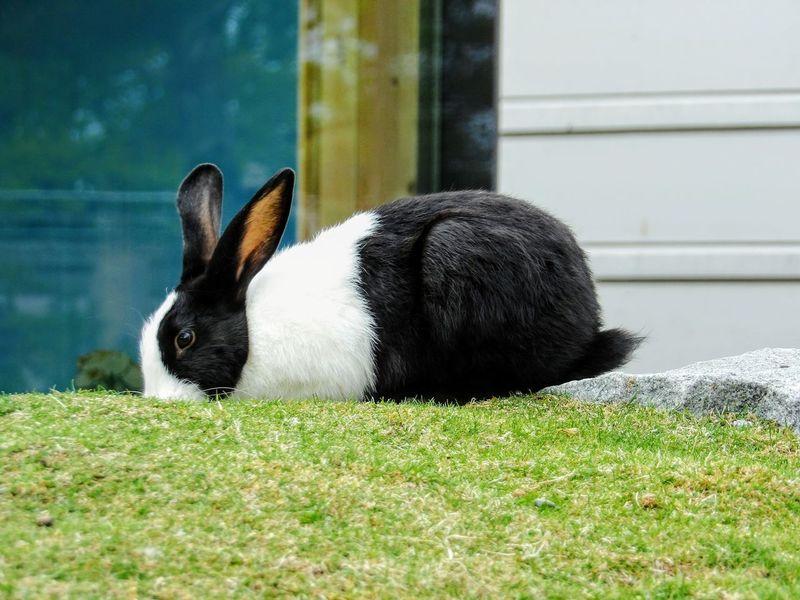 EyeEmNewHere Skansen Sweden Stockholm Swedish Nature Rabbit 🐇