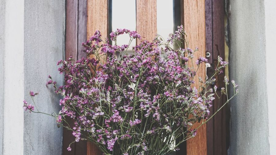 Purple flowers bouquet decorated on window Flower Architecture Plant Growth Built Structure Day Building Exterior Purple Window Outdoors Pink Color No People Fragility Nature Freshness Window Box Close-up Blooming Flower Head