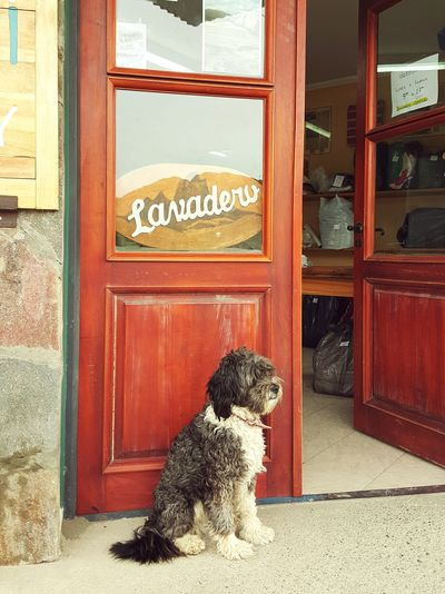 I might need some laundry for myself Laundry I Love Dogs Southamerica El Chalten Shop Dog Good Doggy! 洗衣店 Loyalty Watch Dog