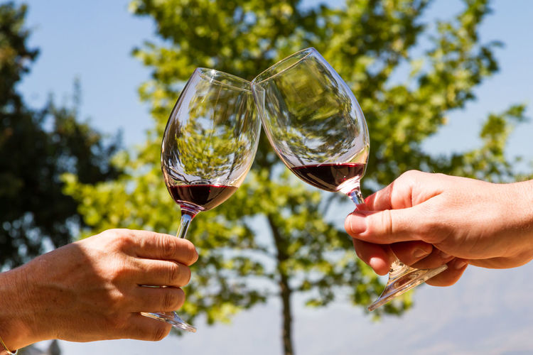 Cropped hands of friends toasting red wine against trees