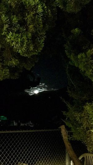 View from my patio. Full Moon Nightsky Beautifulmoon Moonlight Themoonisbeautiful Throughthetrees Lovetheview Fullmoon