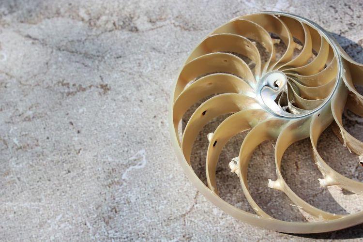 High angle view of shells on the table