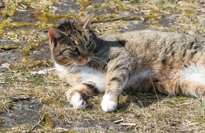 Cat relaxing on field