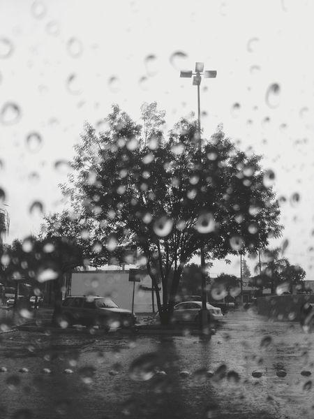Have you ever seen the rain Rainy Days Lluvia Marzo