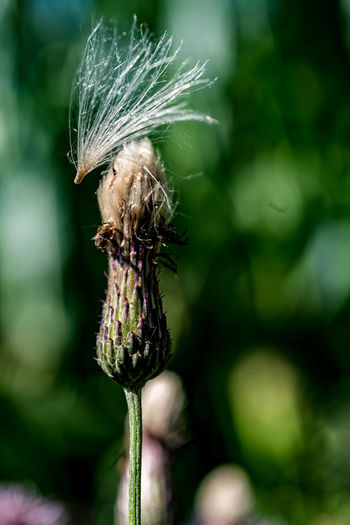 Close-Up Of Withered Flower