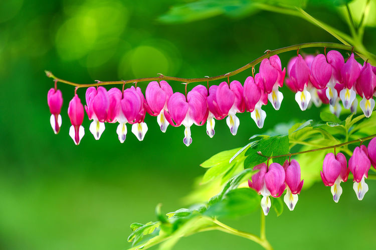 Pink flowers in