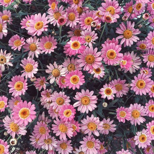 Flowers EyeEm
