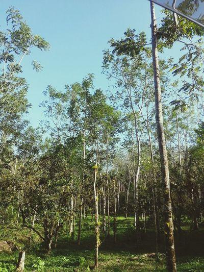 Cedar Feild Trinidad Adventure Seeking Pumping ✌✌✌
