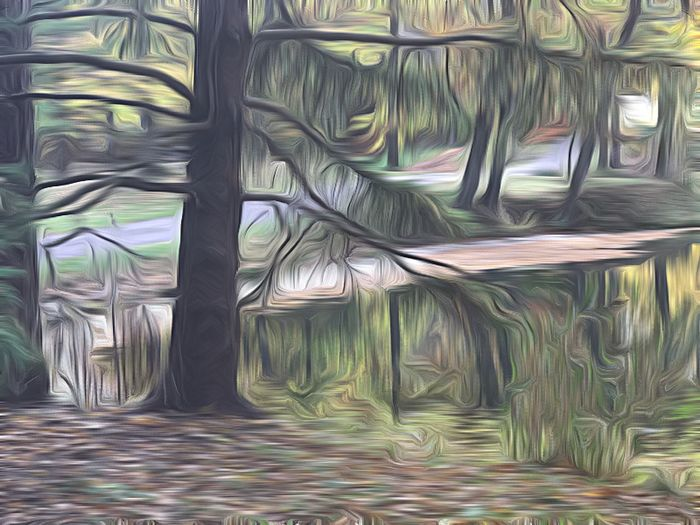 Forest. No People Nature Tree Backgrounds Fine Art Photography IPhoneography IPhone Only Outdoors Landscape