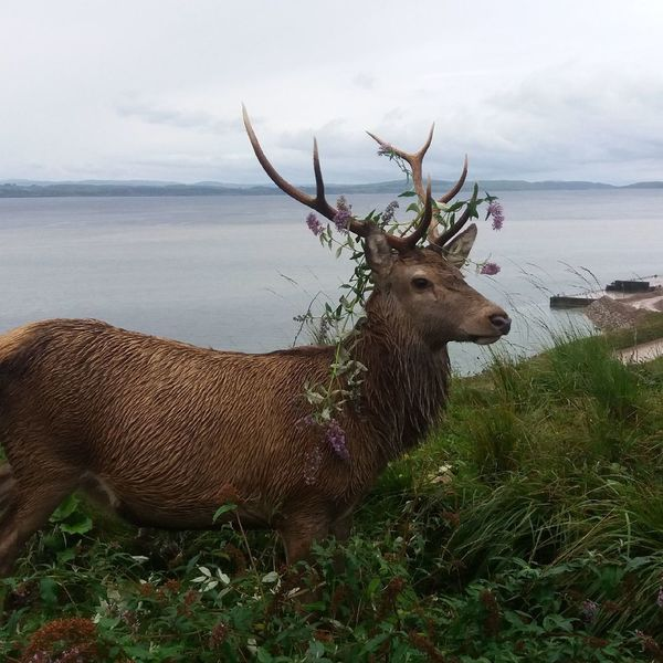 Horned Animals In The Wild One Animal Antler Outdoors Animal Wildlife Deer Landscape Animal Themes No People Nature Mammal Day