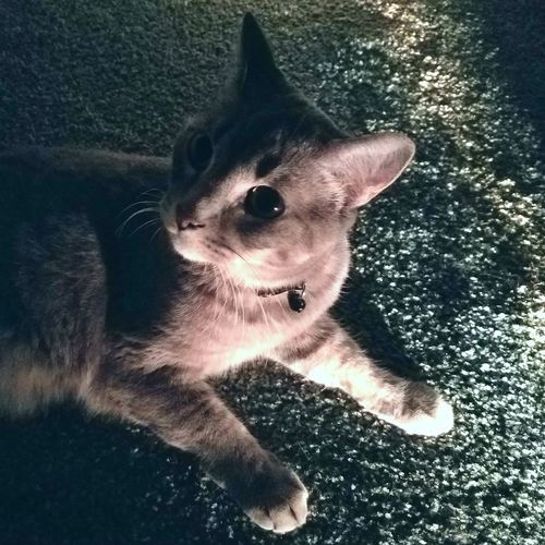 NIGHT SHIFT Cats Of EyeEm Fluffy Love Furry Love Overnight Success