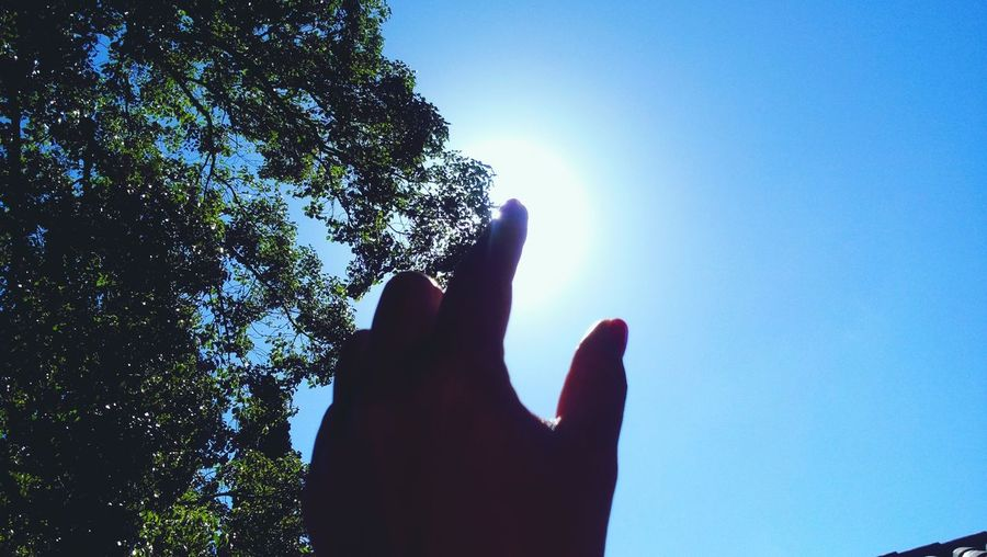 Human Body Part One Person Human Hand Low Angle View People Silhouette Sky Day Blue Outdoors Nature Tree Eyeemphotography Buenos Aires Argentina Photography Amateurphotography Buenos Aires, Argentina  Cloudscape Treelovers Trees_collection Treecollection Tree Of Live
