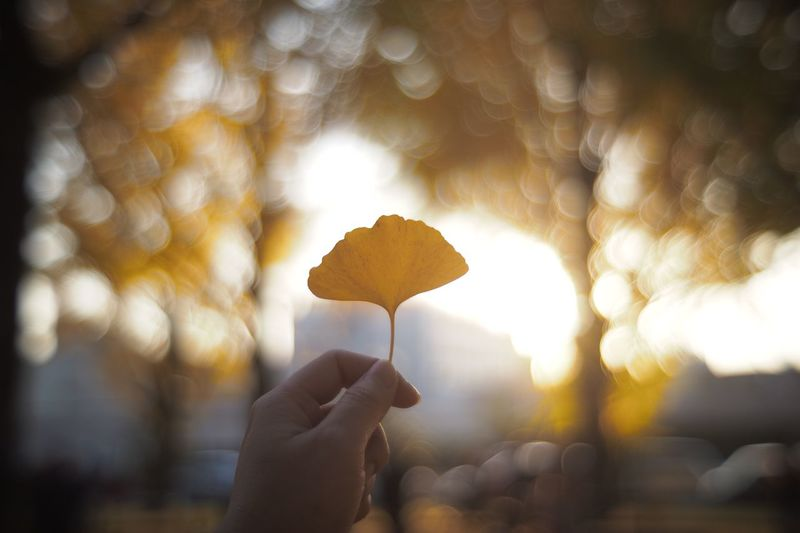 Cropped hand holding leaf during sunset