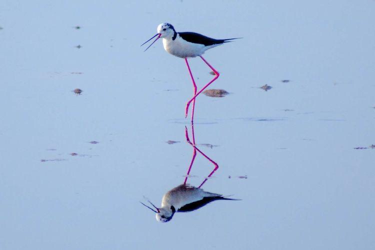 Reflection Of Stilt On Calm Lake