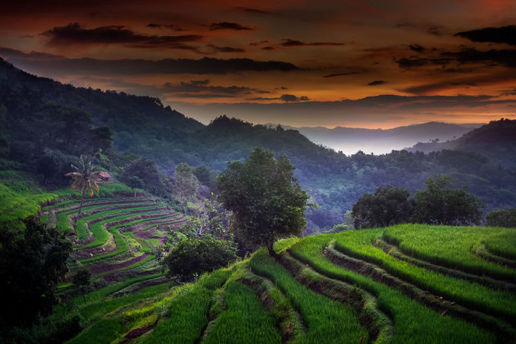 Sunset at sekotong rice fields lombok