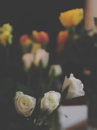 EyeEm Selects Flower Close-up Plant Focus On Foreground Flowering Plant Beauty In Nature Still Life Vulnerability  Selective Focus Petal Inflorescence Succulent Plant Indoors  Freshness Growth No People Nature Day Table Flower Head