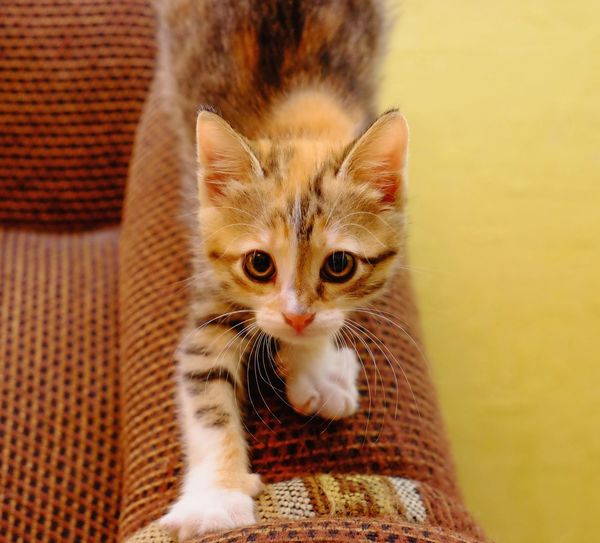 High angle view of cute cat sitting on sofa