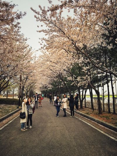 The Cherry Blossoms at Seonyudo last Sunday were amazing. I love Spring Beauty In Nature