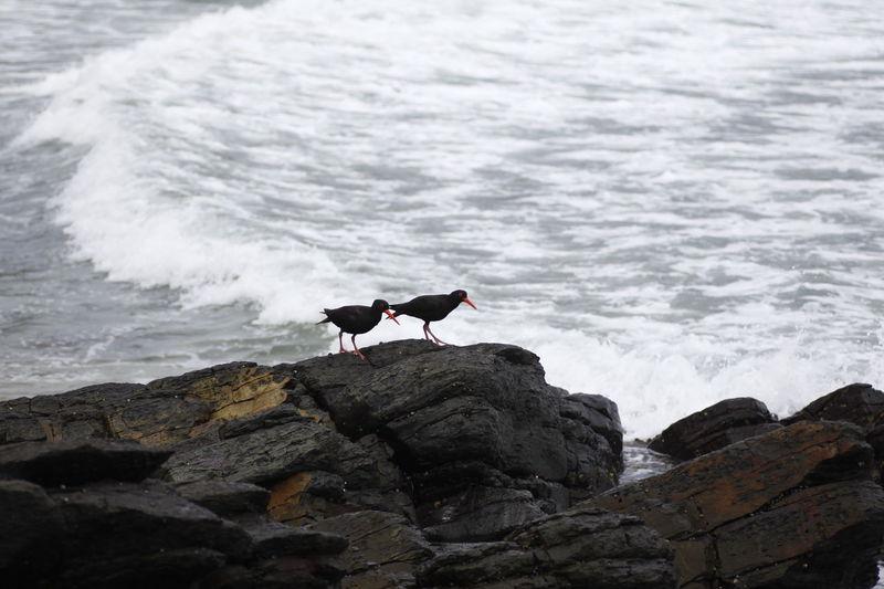 Bird perching on rock in sea