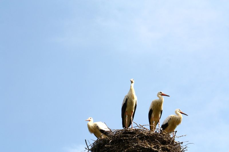 Low angle view of birds perching in nest