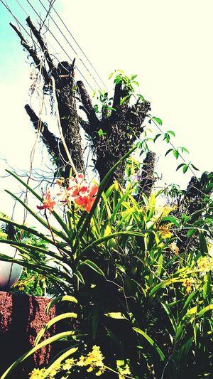 Orkit flower Enjoying Life