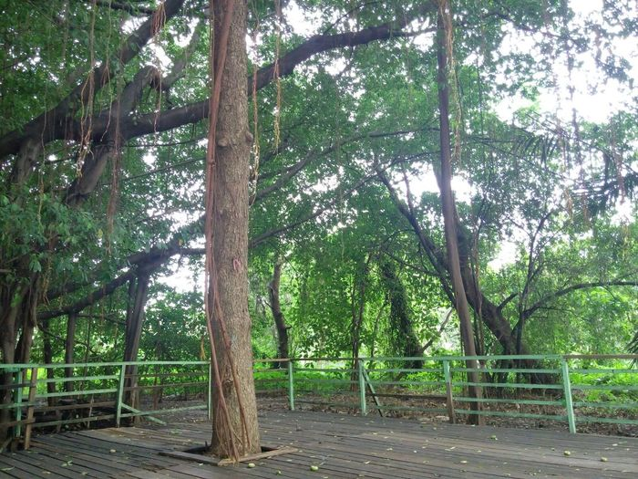 Mangrove Forest Nature On Your Doorstep Nature Makes Me Smile