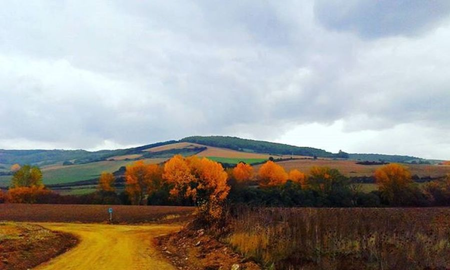 Autumn ❤🍂🍁🌳 Landscapes Orangetree Hills SPAIN Walking CaminodeSantiago