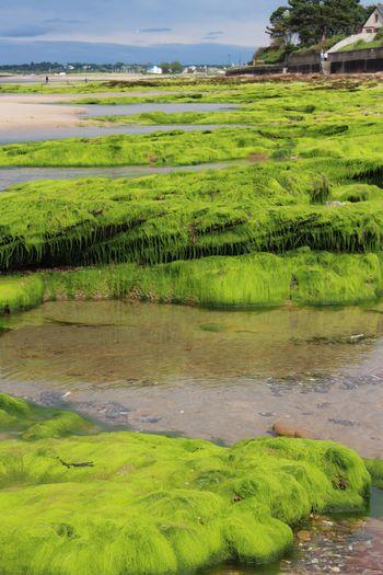Fluorescent Green Bright Colourful Natural Beauty Beachwalk Beach Nairn Scotland Nairn Scotland Seaweed Nature_collection Beachphotography Nature Fluorescent