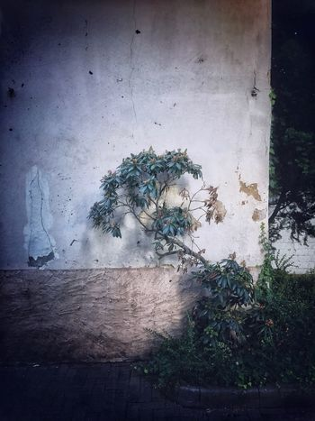 EyeEm Selects Plant Architecture Built Structure Growth Wall
