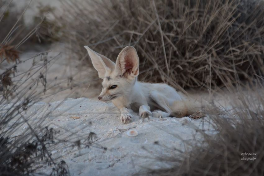 Small Fox EyeEm Animal Lover Animal Mammal Animal Themes One Animal Vertebrate No People Nature Animal Wildlife Outdoors