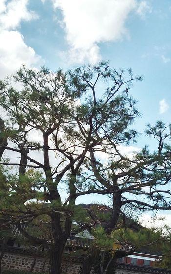 소나무 Trees Enjoying Life Traveling Healing Nature