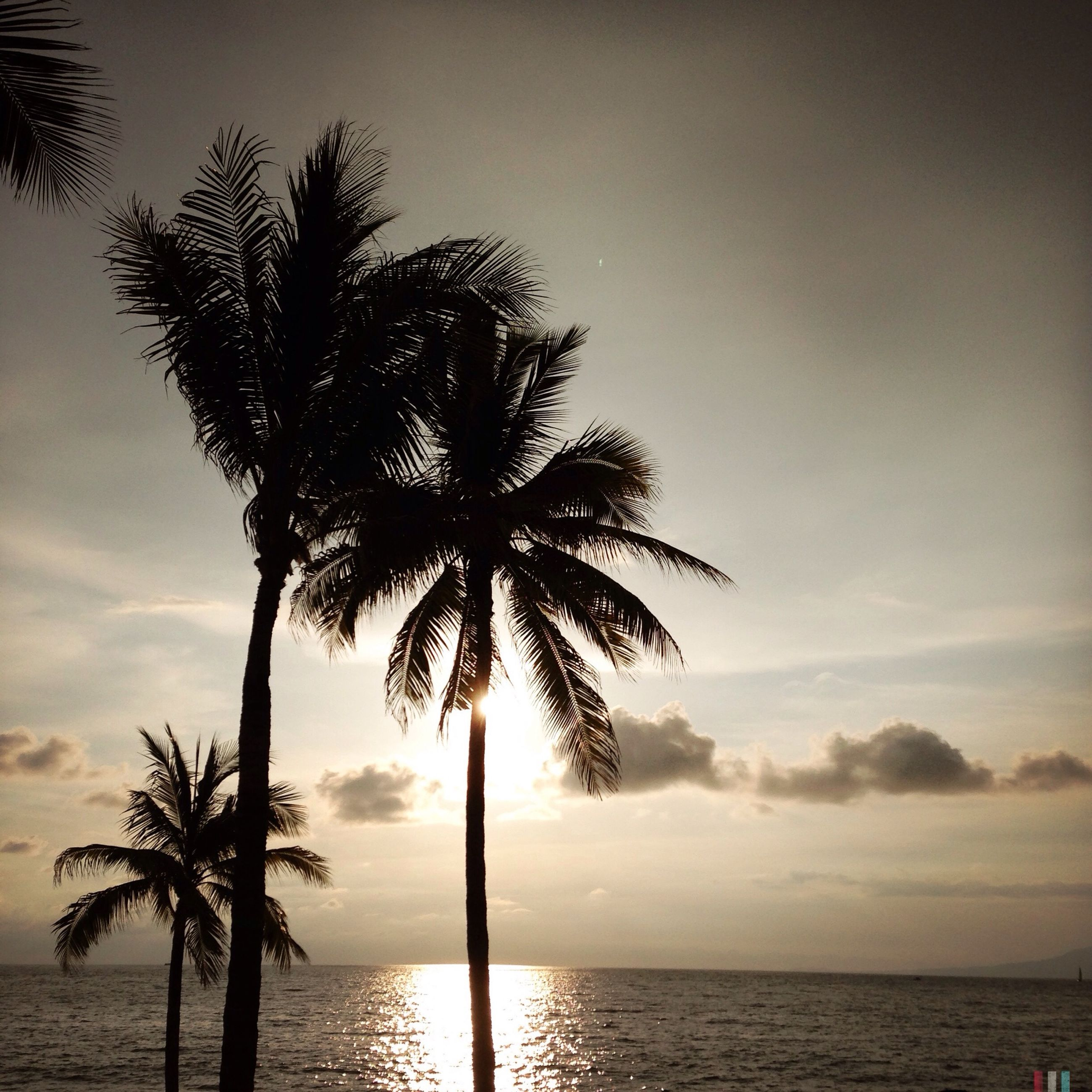 palm tree, silhouette, sea, tranquility, tree, tranquil scene, water, horizon over water, sunset, scenics, beauty in nature, sky, tree trunk, nature, beach, idyllic, coconut palm tree, growth, shore, palm frond